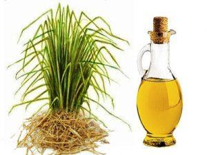 масло травы vetiver