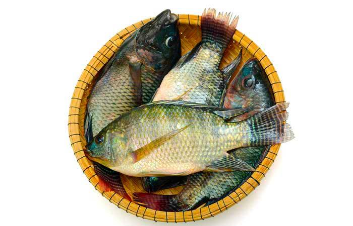 рыба тилапия фото и описание